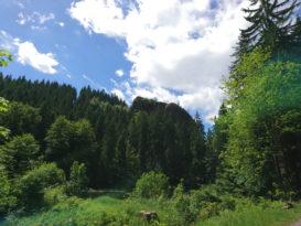 Klettergebiet Falkenstein in Tambach-Dietharz
