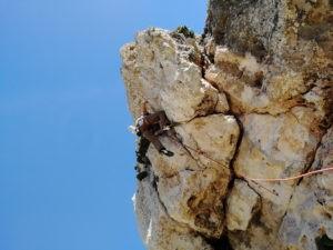 Überhang einer Mehrseillänge im Klettergebiet Wied Babu