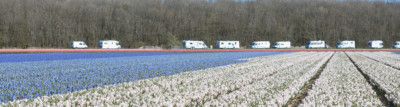 Camping in Holland Tulpen